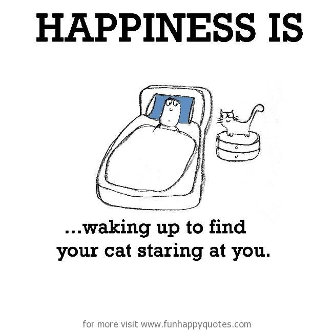 Happiness is, waking up to find your cat staring at you.