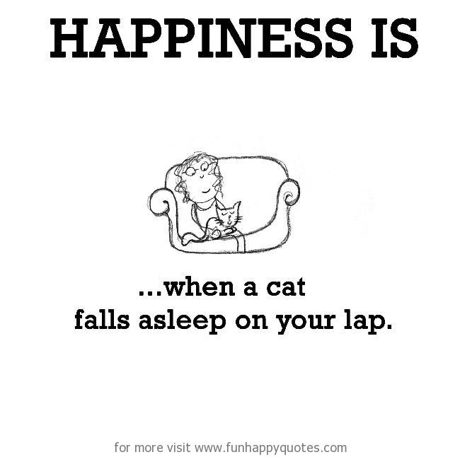 Happiness is, when a cat falls asleep on your lap.