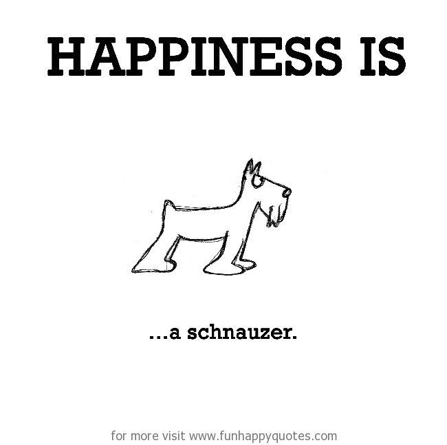Happiness is, a schnauzer.