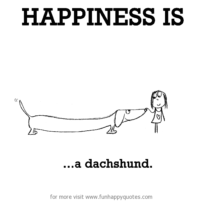 Happiness is, a dachshund.