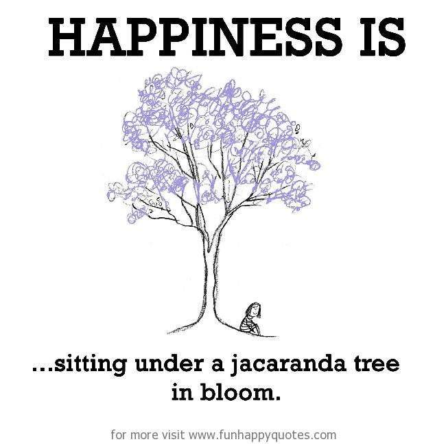 Happiness is, sitting under a jacaranda tree in bloom.